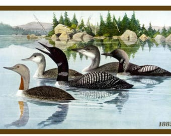 Set of four loon images on ready to use quilt blocks.