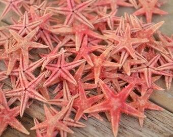 """Red Dyed Starfish, Flat Starfish, Phillipine Stafish (3/4 - 1"""")   10 Pieces"""