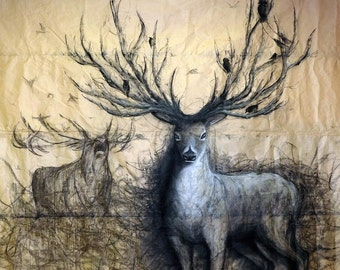 The Guardian by Fiona Tang. Art print, charcoal drawing, animal drawing, stag, buck, antlers, fine art, trompe l'oeil, deer, nature, 3D