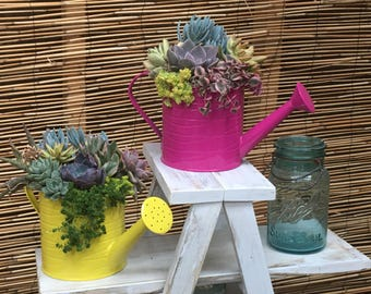 Spring Succulent Arrangement Watering Can Planter Pot Live Plant Centerpiece Mother's Day Basket