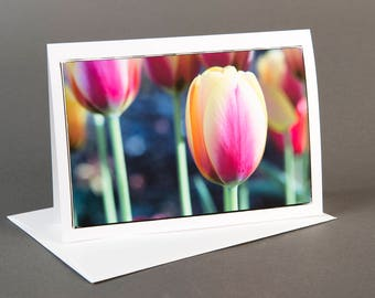 Blank photo notecard, Spring Tulips