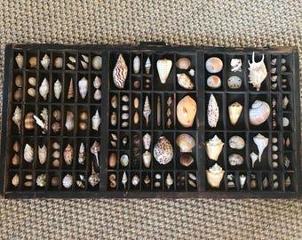 Natural Seashells in Vintage Printers Tray