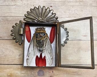 Mini Altar Natural History Terrarium. ...................................................cicada insect oddities curiosities nichos goth boho