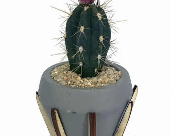 """Synthesis of Life Planter with Live Cactus Plant - Grey - 3.5"""" x 3.5"""" x 6.5"""""""