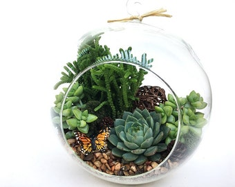 "XLarge Globe Succulent Terrarium Kit ""Woodsy"" with Echeveria and Crassula-Succulent DIY Kit-Birthday Gift-Housewarming Gift-Gift for Him"