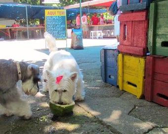 It's a dog world!