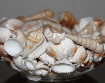 Seashell Bowl, Beach Bowl, Shell Bowl, Beach Decor, Coastal Decor, Nautical Decor