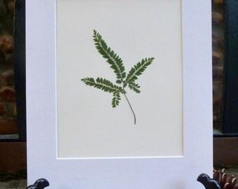 Real Pressed Fern Botanical Art Herbarium of Maidenhair Fern 8x10 OR 11x14