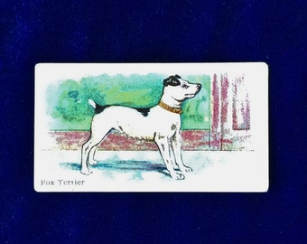 Antique Smooth Fox Terrier Dog Trading Card Philadelphia Caramel Co. c.1910