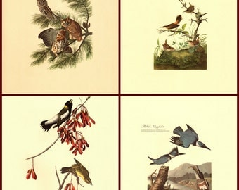 Set of Four Audubon prints reproduced from the Milwaukee Public Library Collection