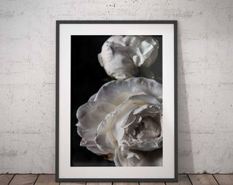 PEONIES FLOWER PRINT 01, printable, minimalist fine art photography, modern wall art