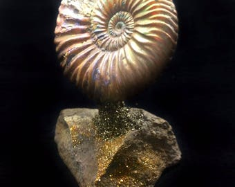 387 CT RARE Vertumniceras Ammonite Fossil On A Pyritized Rock