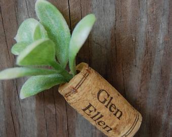 Botanical Wine Cork Magnet Succulent on Glen Ellen Wine Cork