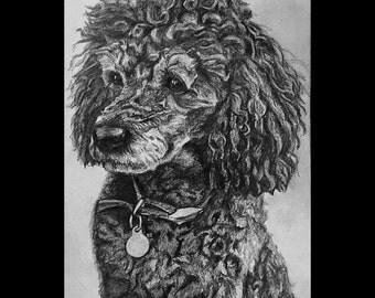 Custom Hand-drawn Dog Portrait