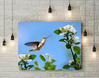 Canvas Art Hummingbird, Hummingbird Wall Art, Wall Art Canvas, Bird Photography, Hummingbird Gift, Nature Prints, Hummingbird and Flowers