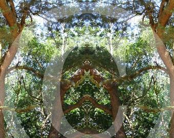 forest secret 1, posters and fine art print 20 x 30 cm 30 x 40 cm, fine art print 29, 7 x 42 cm
