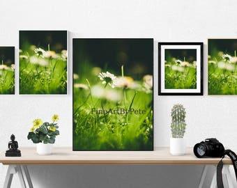 Daisy digital download, flower, grass, instant, printable, print, prints, nature art, daisies, green