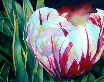 Pink and White Tulip Original Watercolor Painting 15 in X 22 in Pink White Yellow Green