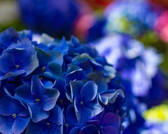 Blue Flowers Photo Print