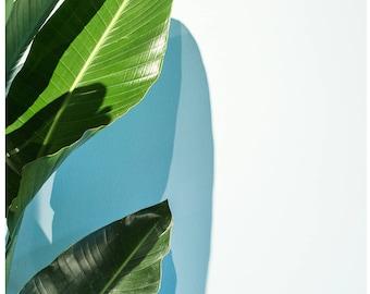 Plant LIfe #10 | Framed
