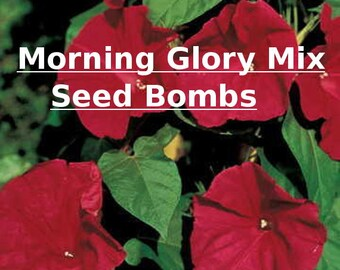 Organic Seed Bomb - 3PK - Morning Glory Seed Bombs - Annual Seed Bomb - Save the Bees - Gardening Gift- Seed Bomb Gift - Flower Seed Bomb