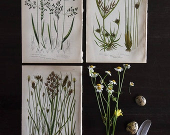 Botanical Prints, Antique Prints, Antique Book Plates, 19th Century Prints, Meadow Grasses, Vintage Prints, Wall Art, Botanical Prints