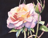 """Notecard """"Perfect Rose"""" by Sandi McGuire"""
