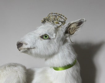 Vintage Taxidermy goat, Jeanne D'arc Living, Nordic Decor,  White Goat,  Kid goat