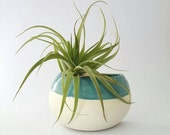 Medium Wall Pocket for Air Plants in Blue, Ready to Ship
