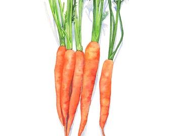 Carrots print, carrot print, carrots watercolor, 5 by 7, C16116, vegetable print, vegetable watercolour, kitchen wall art, vegetable art