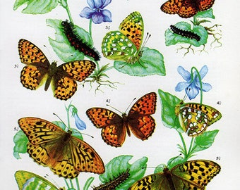 1960 Butterfly Print, plate 45 Vintage Antique Book Plate prints, 5 butterflies insects nature art illustrations