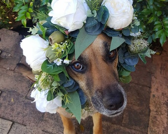 Dog flower crown, puppy flower collar.  Flower garland for dogs. White roses and peonies, Australian natives banksias, gumnuts, wax flower