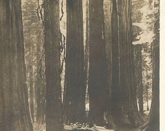 """Vintage Snapshot """"Sequoia Sightseers"""" Giant Redwoods Forest Sequoia National Park California Antique Car Found Vernacular Photo"""