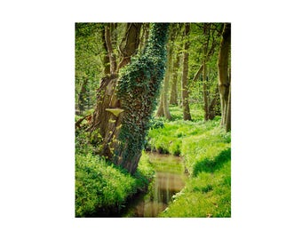 Green Forest Photography, Print, Nature, Stream, Spring Decor, River, Trees, Rural Landscape, Woods, Large Wall Art, The Shire, Overgrown