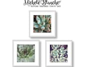 Succulents Photo Set, Sedum Photography, Pastel Green Photos, Nature Print set, Sedum Art, Mint Green Square Photo Art Print Set