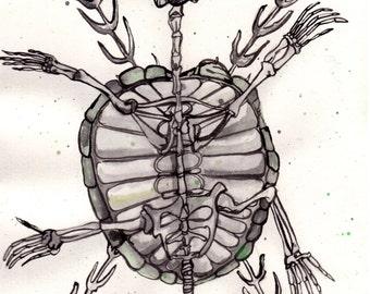 "8x10 Marine Skull Art Print ""Turtle Skeleton"" Painting by Ally Cross"