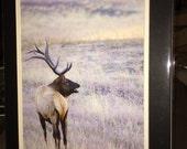 Elk Standing - Matted Print 11 x 14