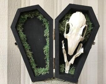 Rabbit Skull and Moss Coffin
