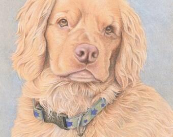 Custom Pet Portrait, Colored Pencil Dog, Original, Hand Drawn Art from your Photo
