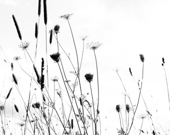 Silhouette Print - B&W, black and white, Grasses, grass, flowers, photograph, living room canvas , fine art photography, large,
