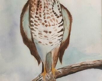 Peregrine Falcon Watercolor Print