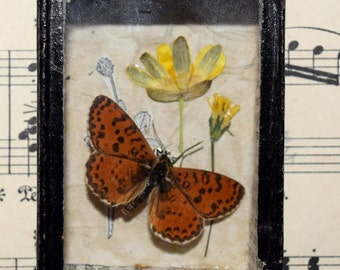 Butterfly and Flower Curio/Picture/Display