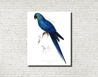 Bird Print, Hyacinth Macaw Print Birds Poster Wildlife Art Parrot Illustration Ornithology Fine Art Print  Edward Leer Ornithologist Gift