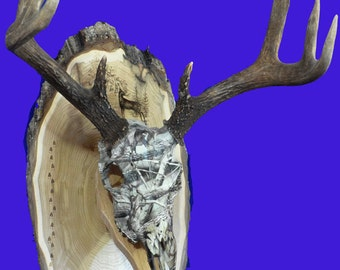 Hunting Gift ~ European Mount ~ Engraved Photo ~ Deer Hunting ~ Deer Skull Mount ~ Gift For Hunter ~ Antler Mount ~ Antler Plaque ~ Hunting