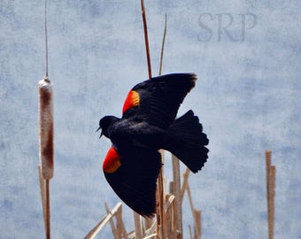 Tilt-A-Whirl - INSTANT DOWNLOAD - Red-Winged Blackbird