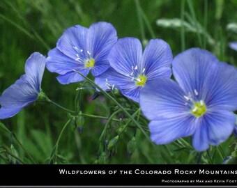 Colorado Wildflower Photography Portfolio - Custom Printed Hardcover 8.5x11