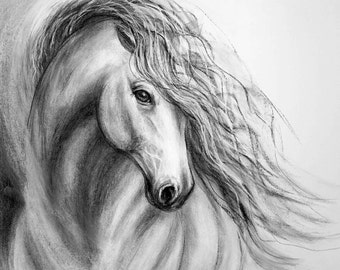 Original Charcoal horse drawing of 'Equine Sublime II' on paper with matting
