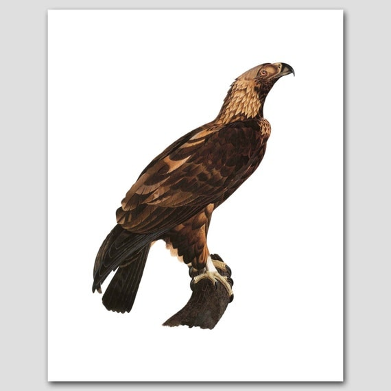 Eagle Art, Folk Art (Bird Print, Home Office Wall Decor) -- 8x10 or 11x14 -- 18th Century Artist