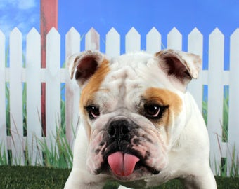Card #50 /Pffft on Cancer ~ English Bulldog Cancer and Breast Cancer Greeting Card