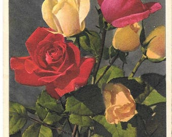 Roses, by Thor E. Gyger, Adelboden, Vintage Unused Postcard, circa 1940's, Switzerland #430.